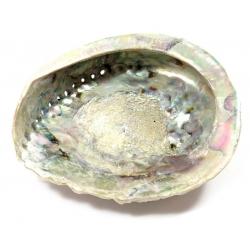 Abalone Shell (XL)
